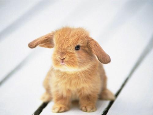 Sweetness Rabbit