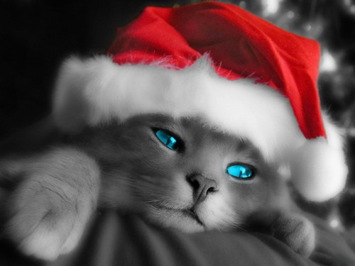 Christmas Kitty Cat