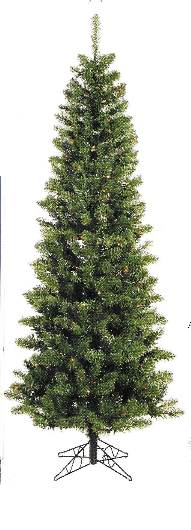Salem Pencil Pine