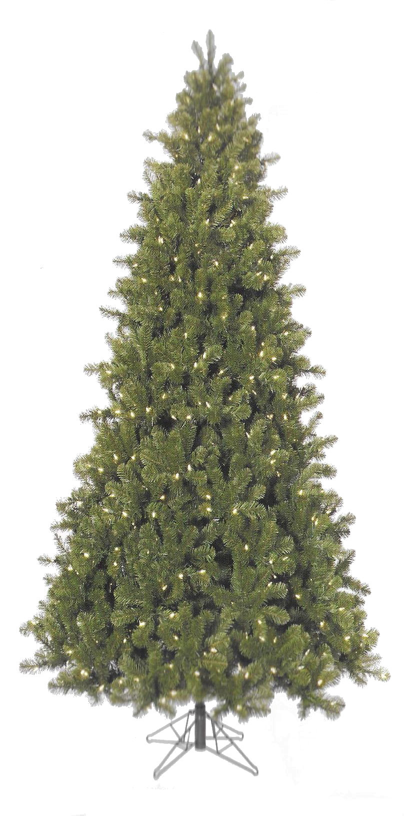 Ontario Spruce
