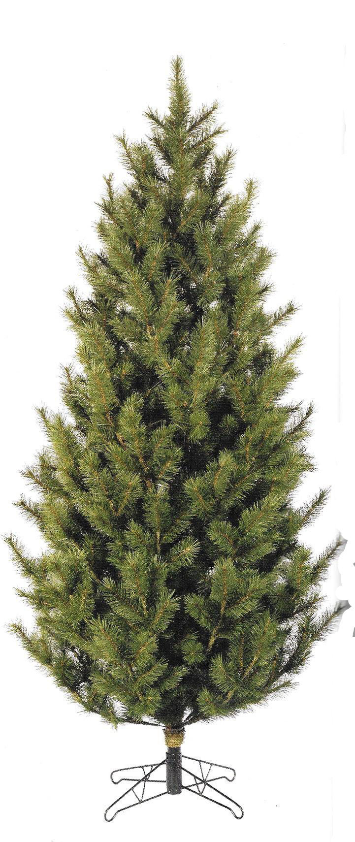 Cayote Pine - Full sized tree