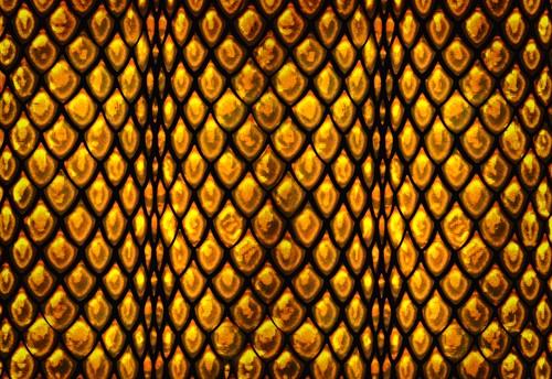 Golden Snakeskin