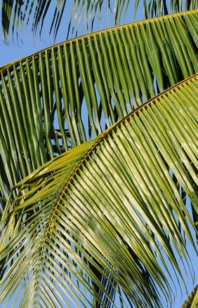 unique palm sunday