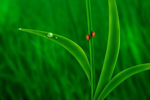 Ladybug Friends