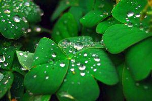 fresh herbs for organic skin care
