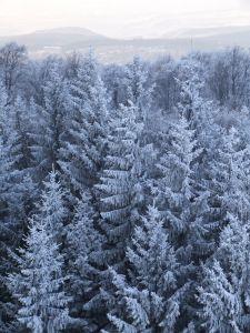Life like Artificial Christmas Trees by Vickerman Company.